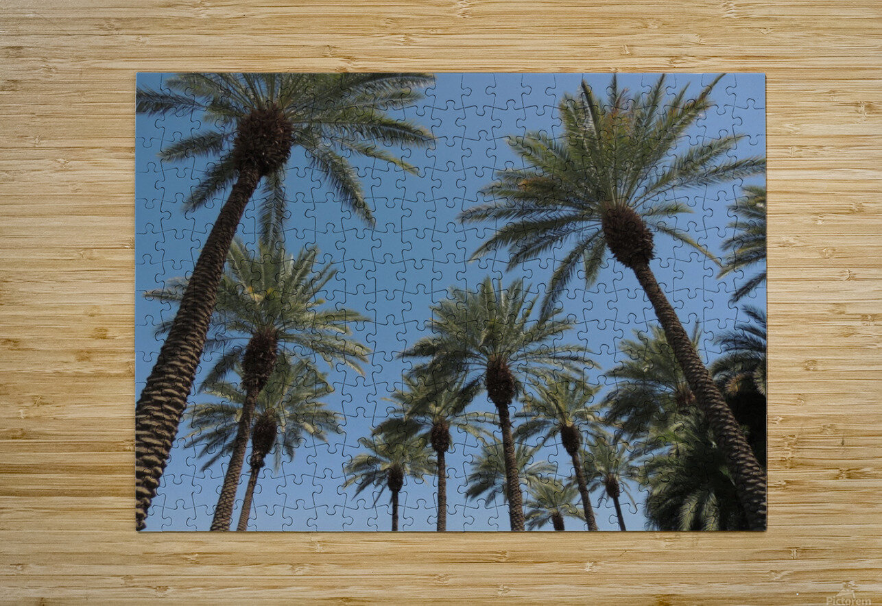 Date Garden Oasis  HD Metal print with Floating Frame on Back