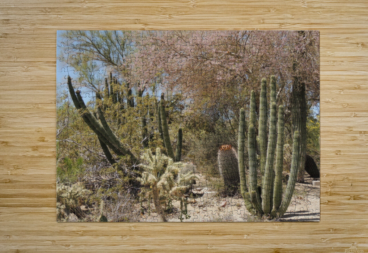 Cactus Garden  HD Metal print with Floating Frame on Back