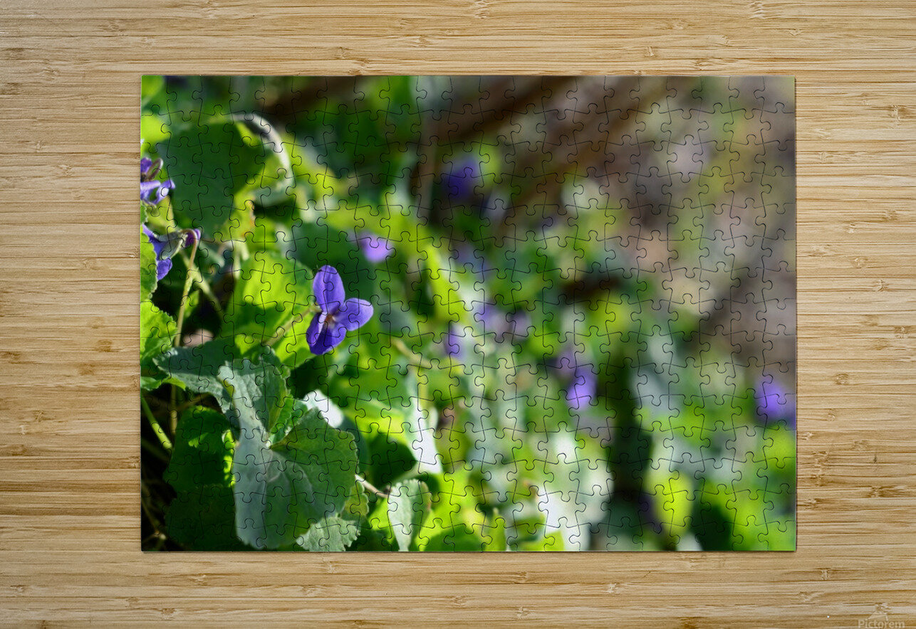Spring sweet violets in the garden  HD Metal print with Floating Frame on Back