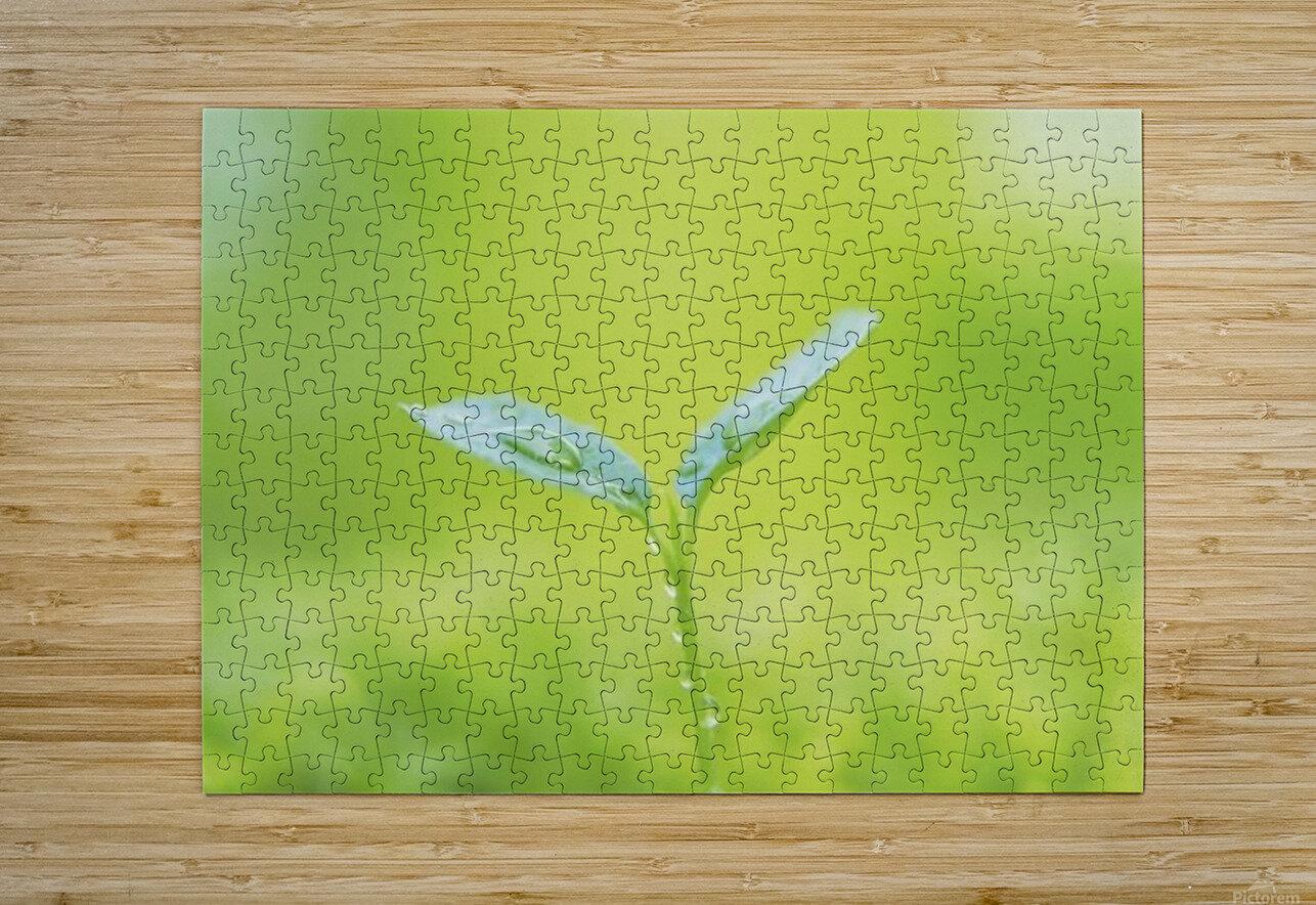 landscape_2_0846  HD Metal print with Floating Frame on Back