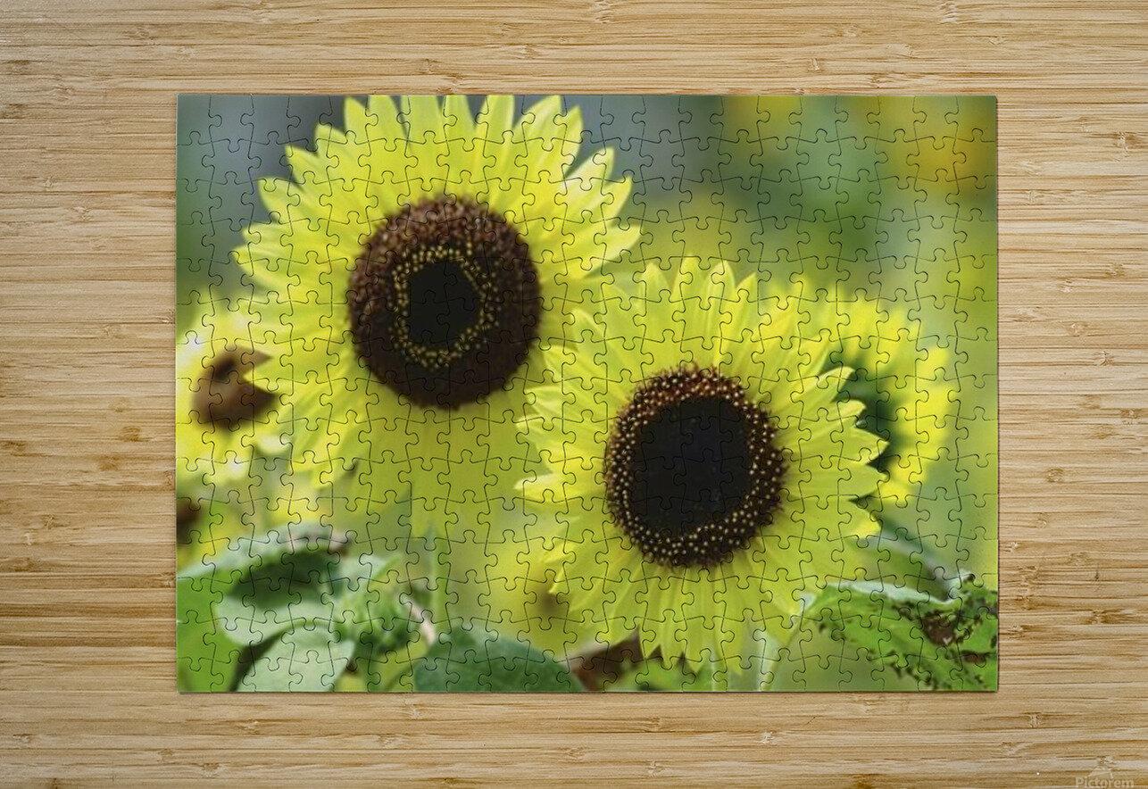 landscape_2_0976  HD Metal print with Floating Frame on Back