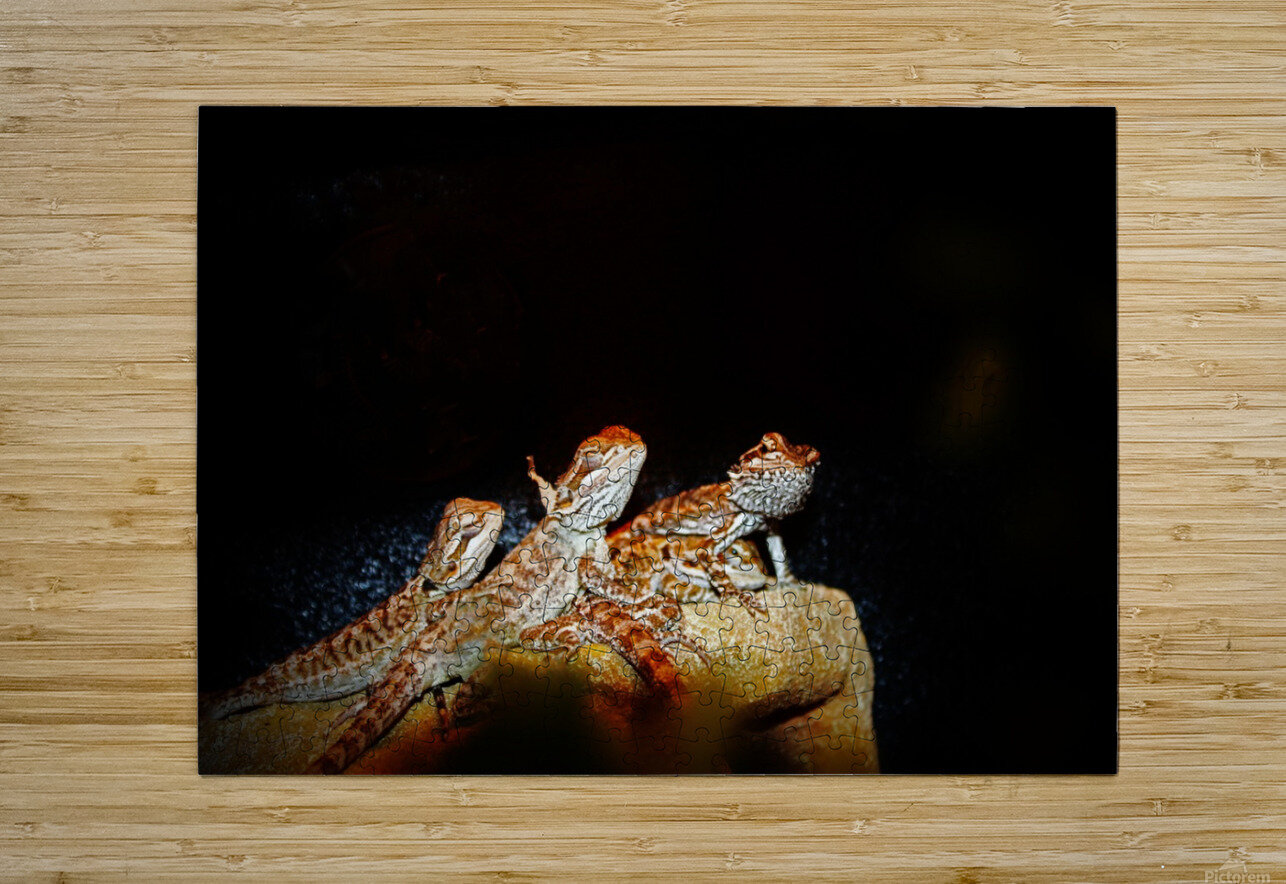 Reptile movie Stars  HD Metal print with Floating Frame on Back