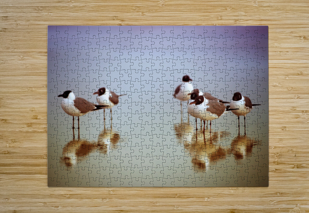 Birds on the Beach  HD Metal print with Floating Frame on Back