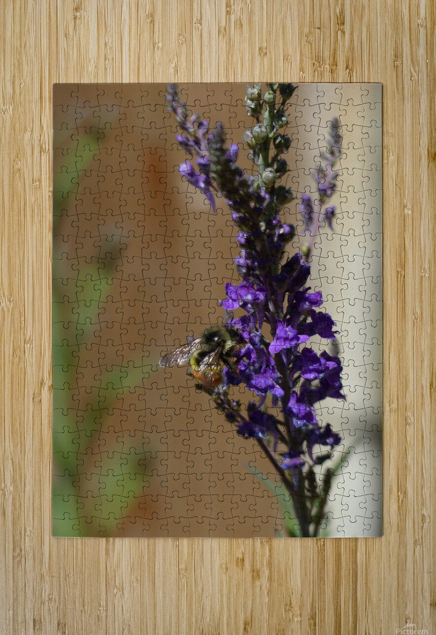 Bee Love  HD Metal print with Floating Frame on Back