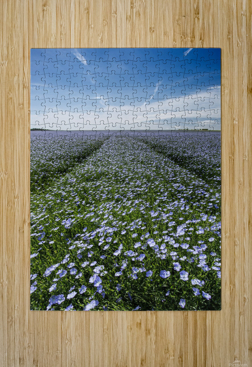 Linseed Oil Contrails  HD Metal print with Floating Frame on Back