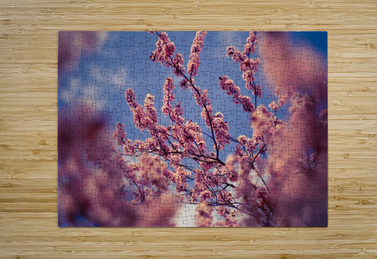 Spring cherry flowers  HD Metal print with Floating Frame on Back
