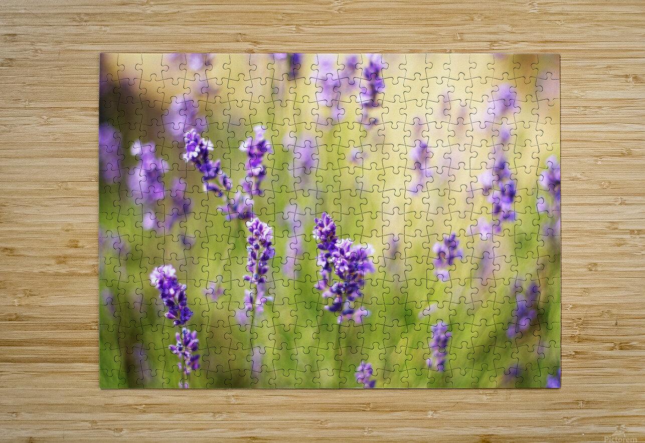 Lavender flowers  HD Metal print with Floating Frame on Back