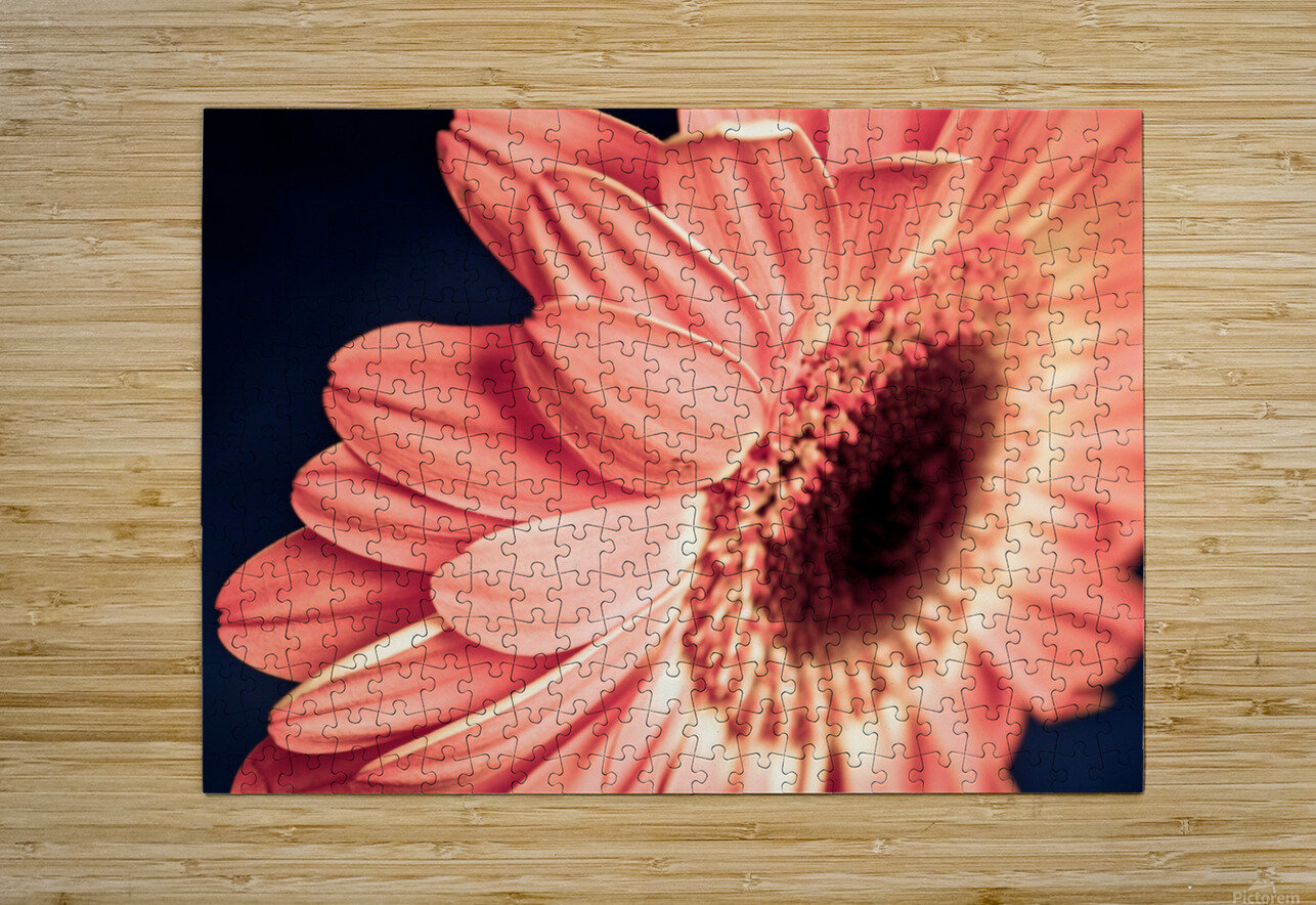 Gerbera flower background  HD Metal print with Floating Frame on Back