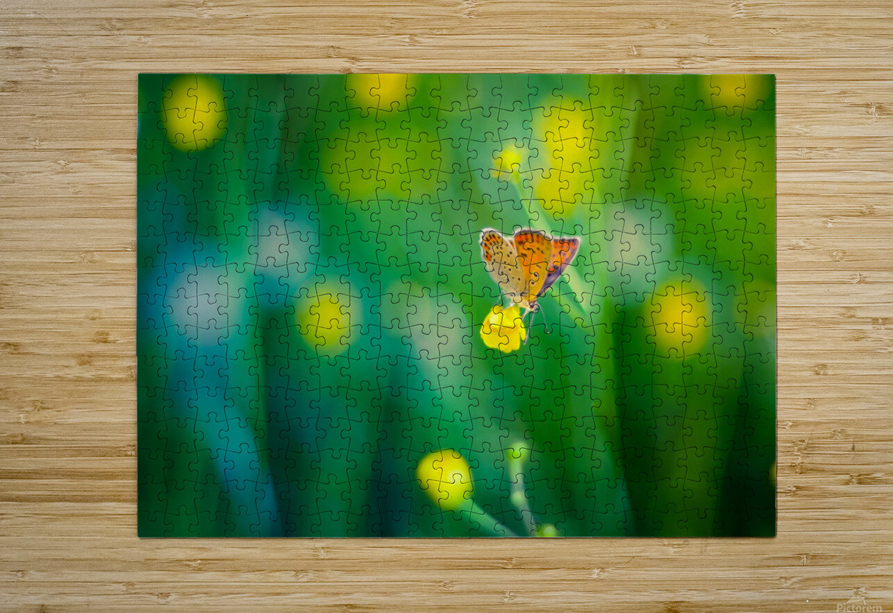 Butterfly summer background  HD Metal print with Floating Frame on Back