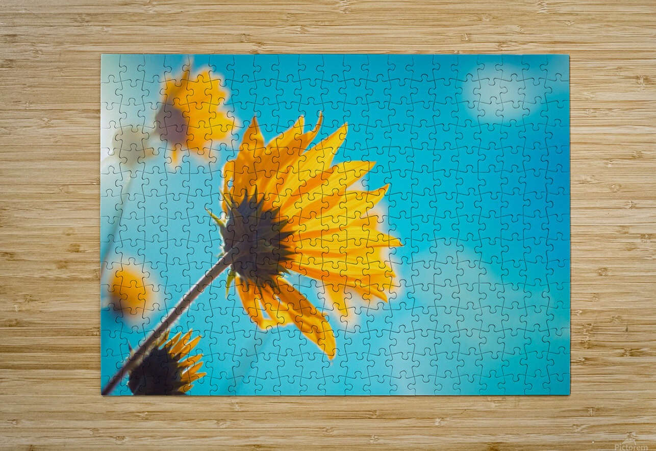 Yellow flowers and blue sky  HD Metal print with Floating Frame on Back