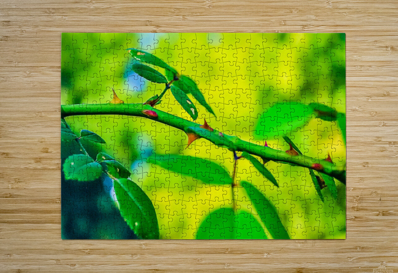 MHPBartlettArboretum 10  HD Metal print with Floating Frame on Back
