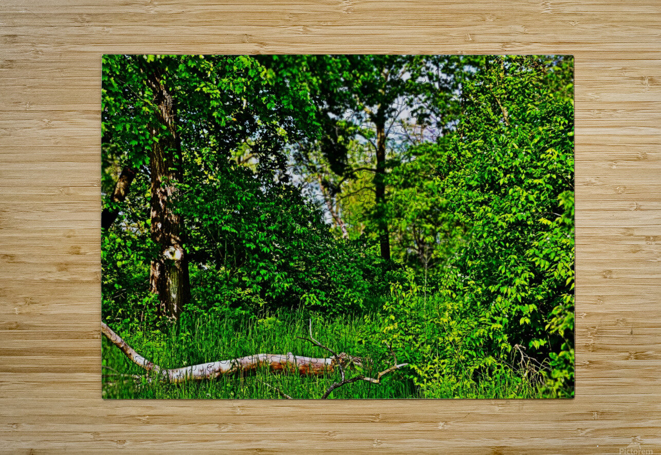 Life in the Shadows of the Trees  HD Metal print with Floating Frame on Back