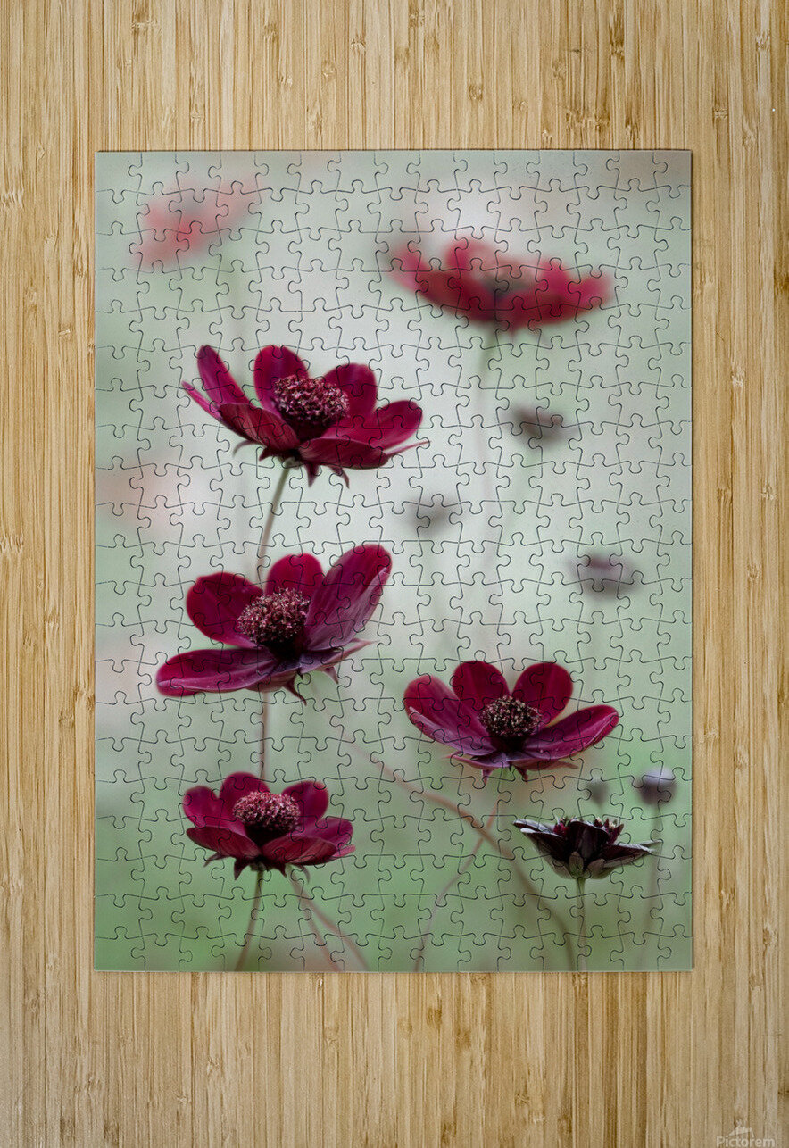 Cosmos sway  HD Metal print with Floating Frame on Back