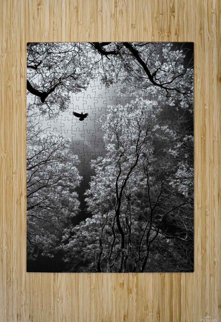 Flight  HD Metal print with Floating Frame on Back