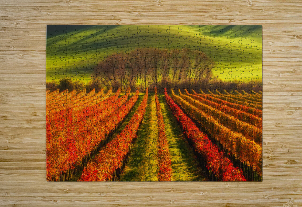 vine-growing  HD Metal print with Floating Frame on Back