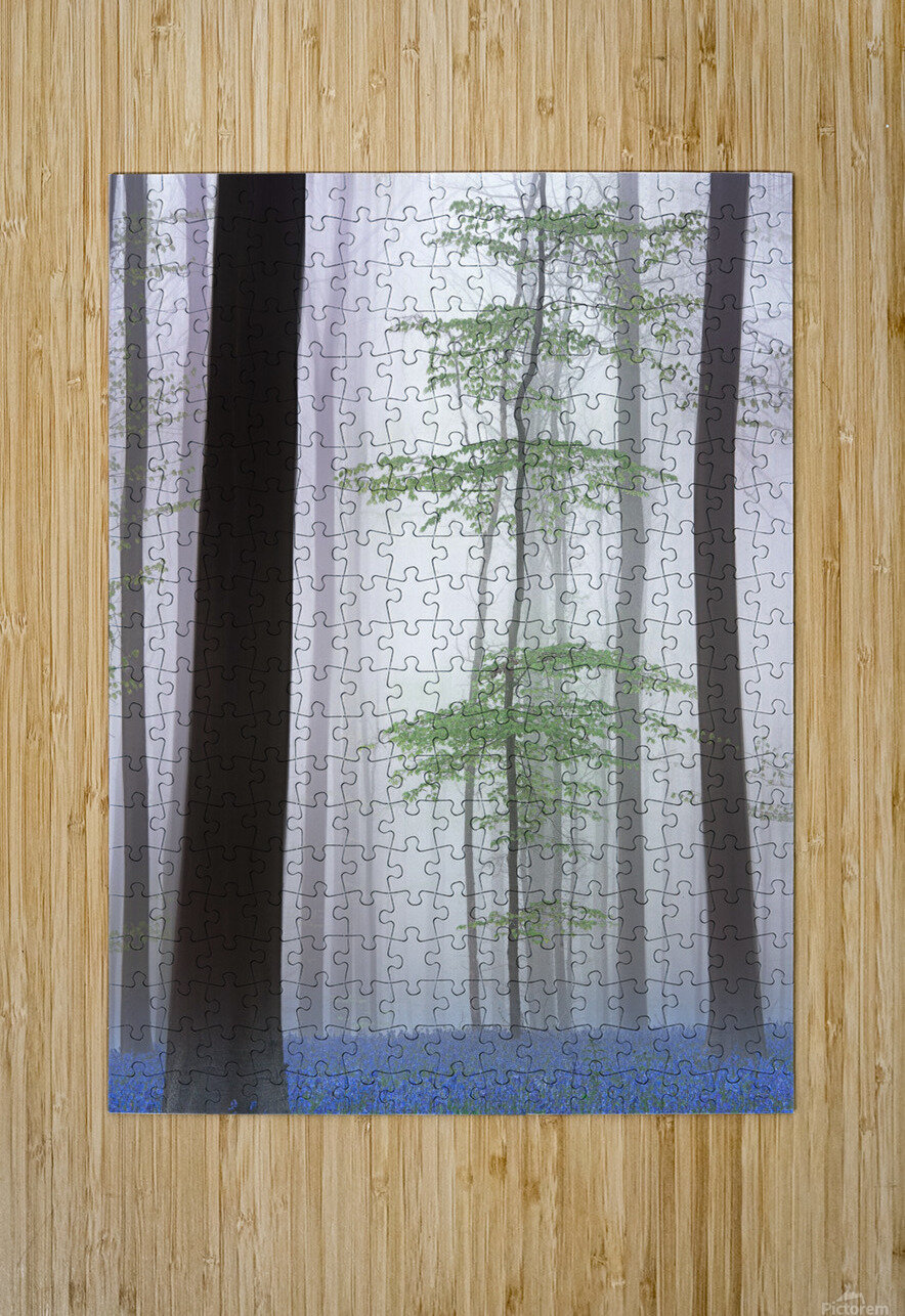 foggy forest ....  HD Metal print with Floating Frame on Back