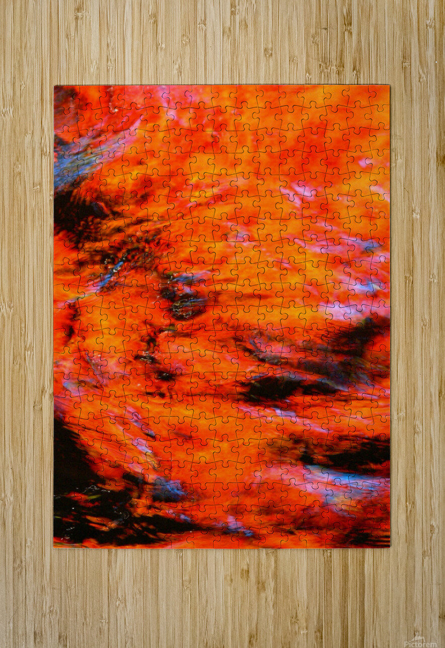 The Flock Orange  HD Metal print with Floating Frame on Back
