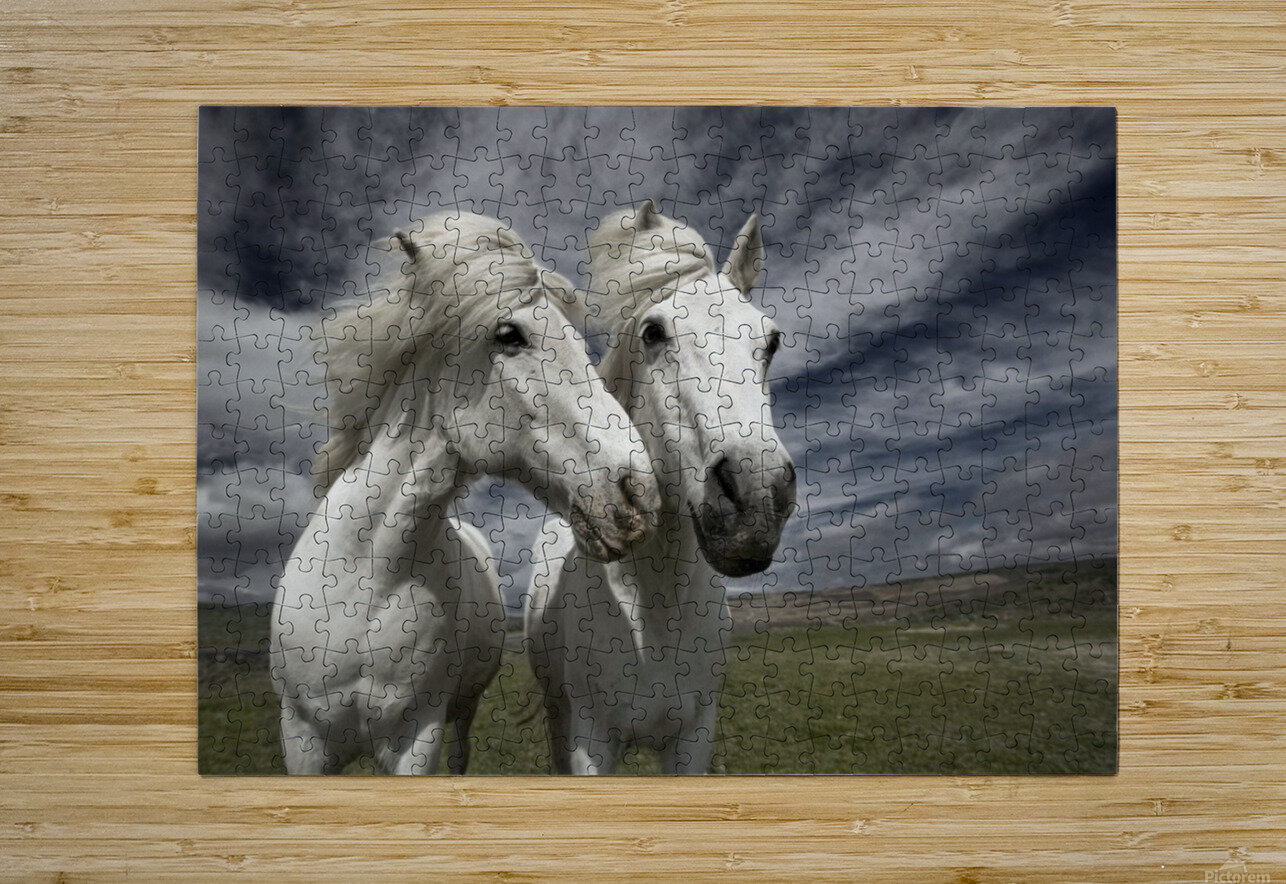 Inseparables  HD Metal print with Floating Frame on Back