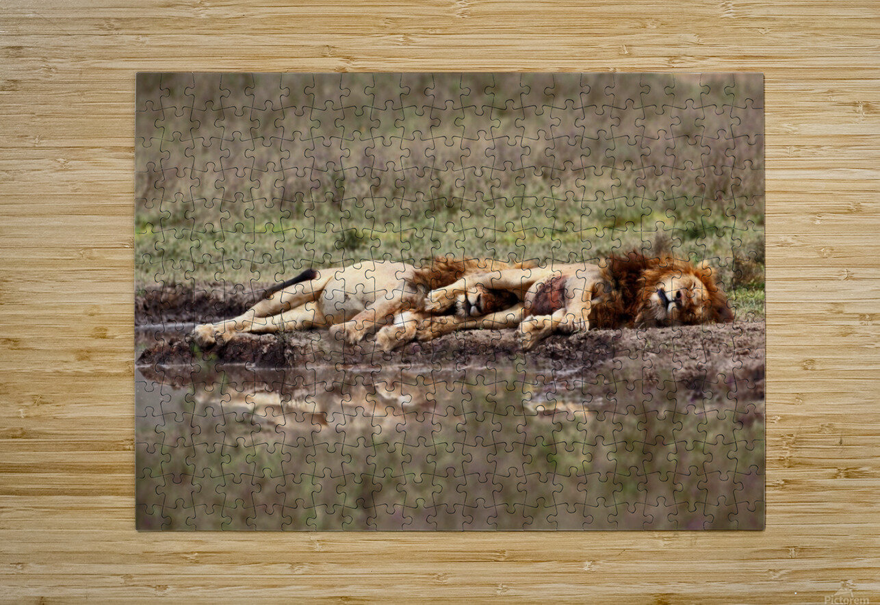 Warriors at rest  HD Metal print with Floating Frame on Back