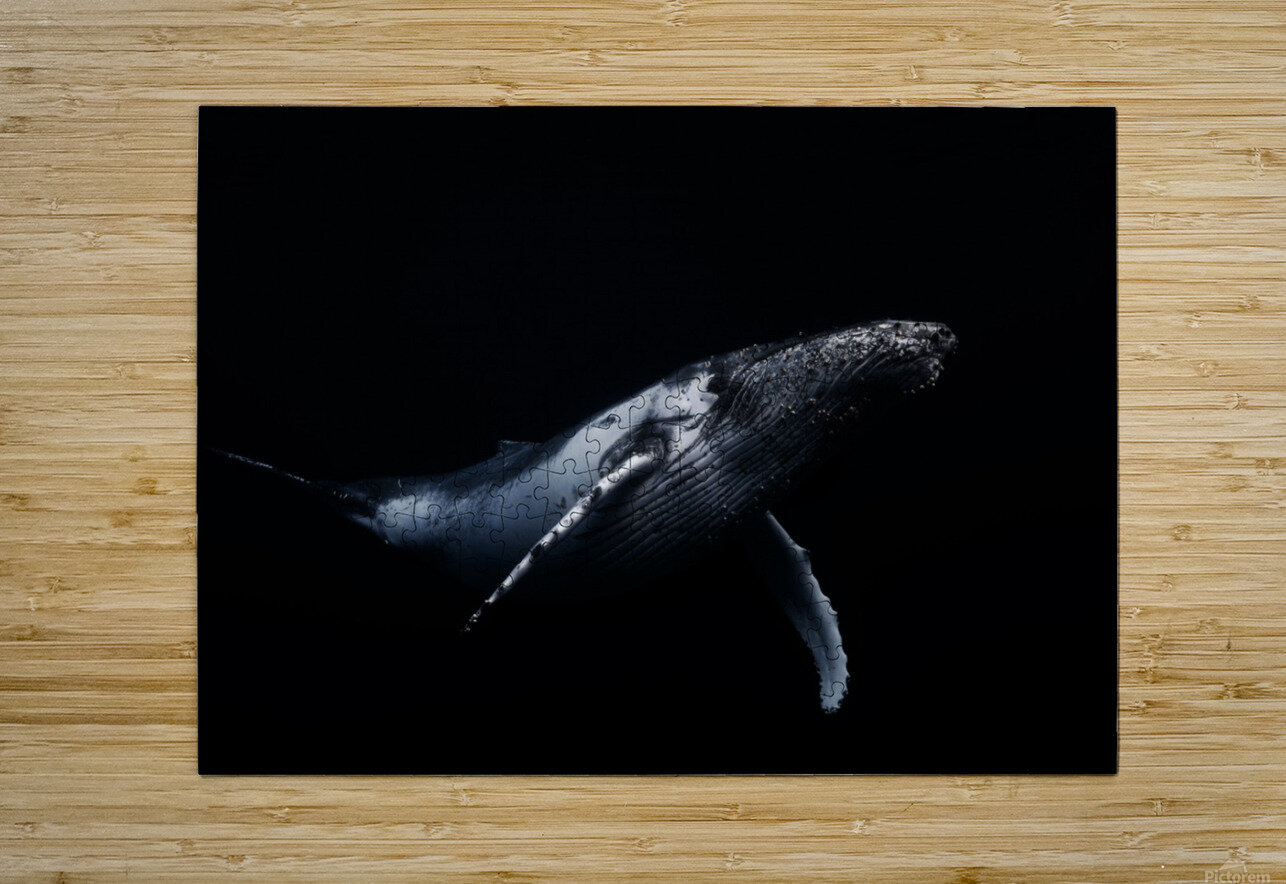 Black & Whale  HD Metal print with Floating Frame on Back