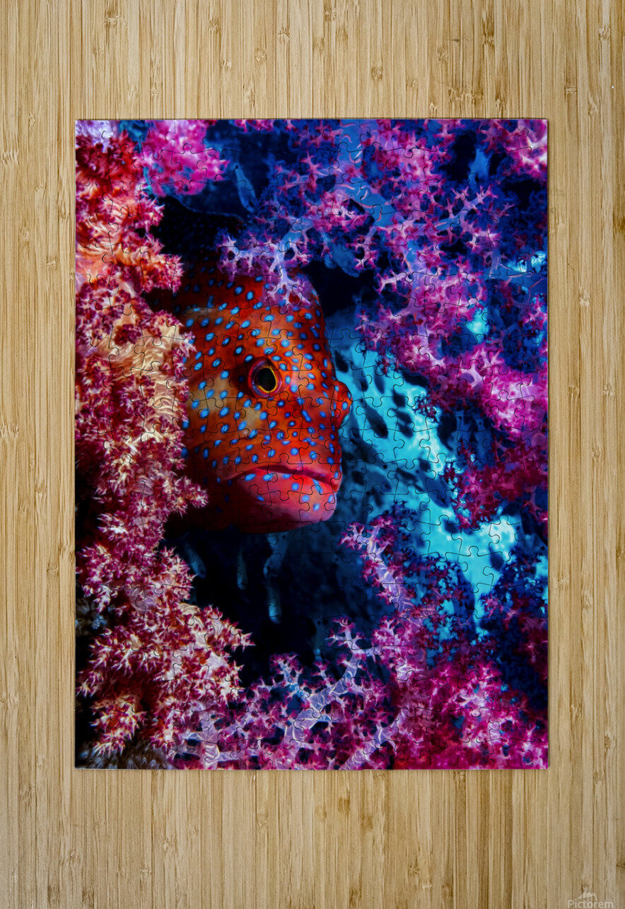Coral Hind  HD Metal print with Floating Frame on Back