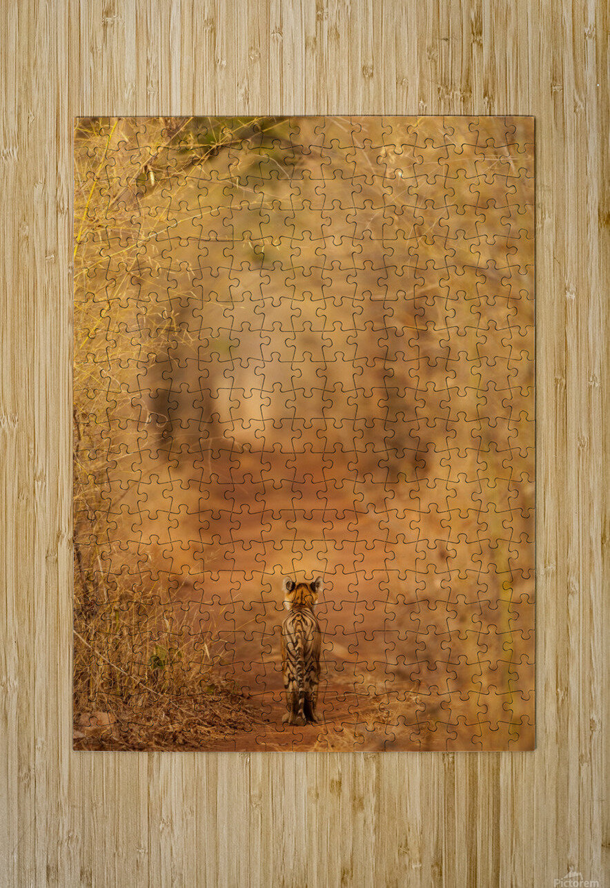 The Tiger in  the Tunnel  HD Metal print with Floating Frame on Back