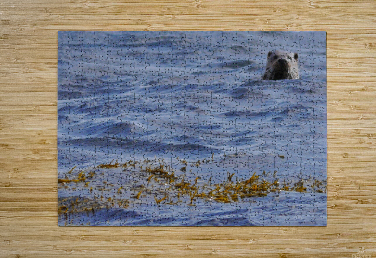 Watching Otter  HD Metal print with Floating Frame on Back