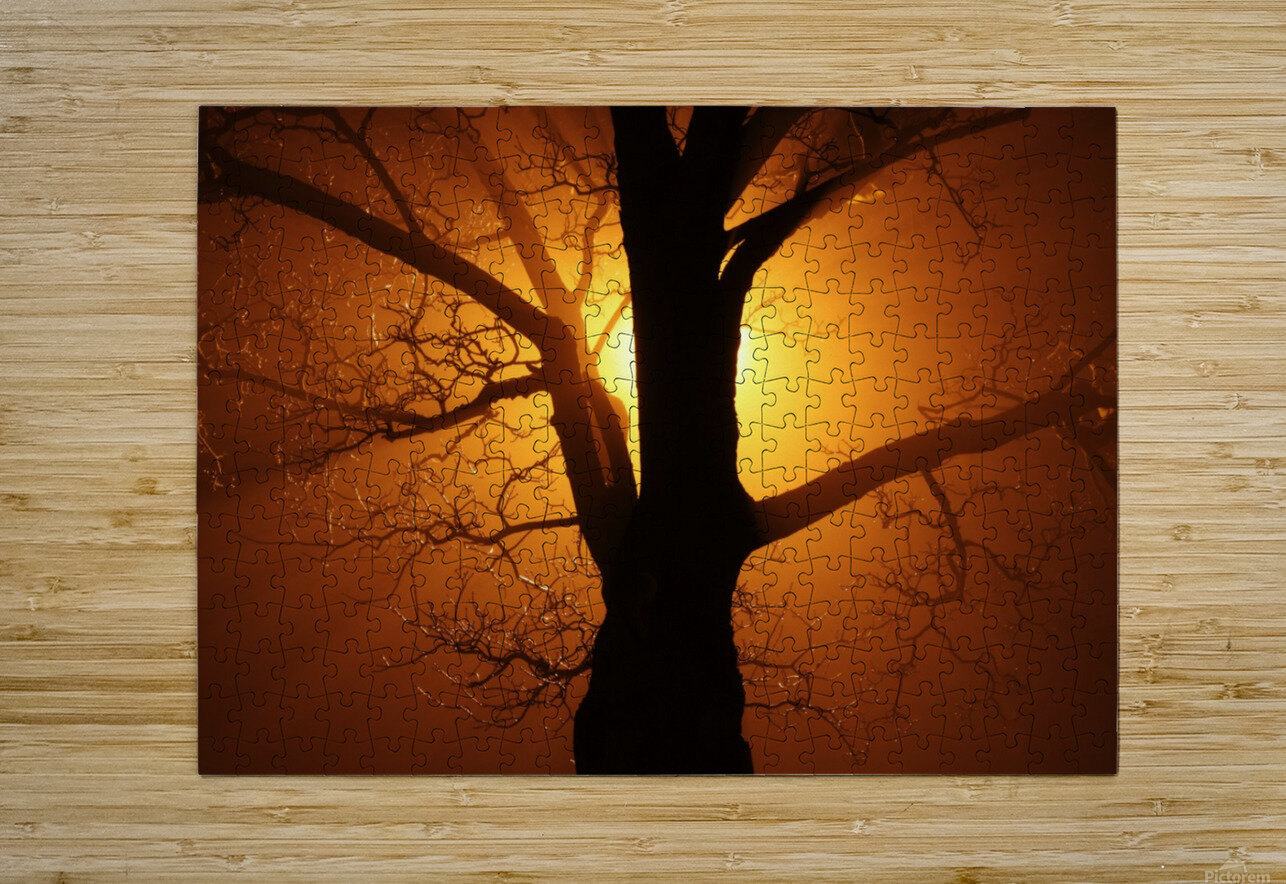 abstract sun tree  HD Metal print with Floating Frame on Back