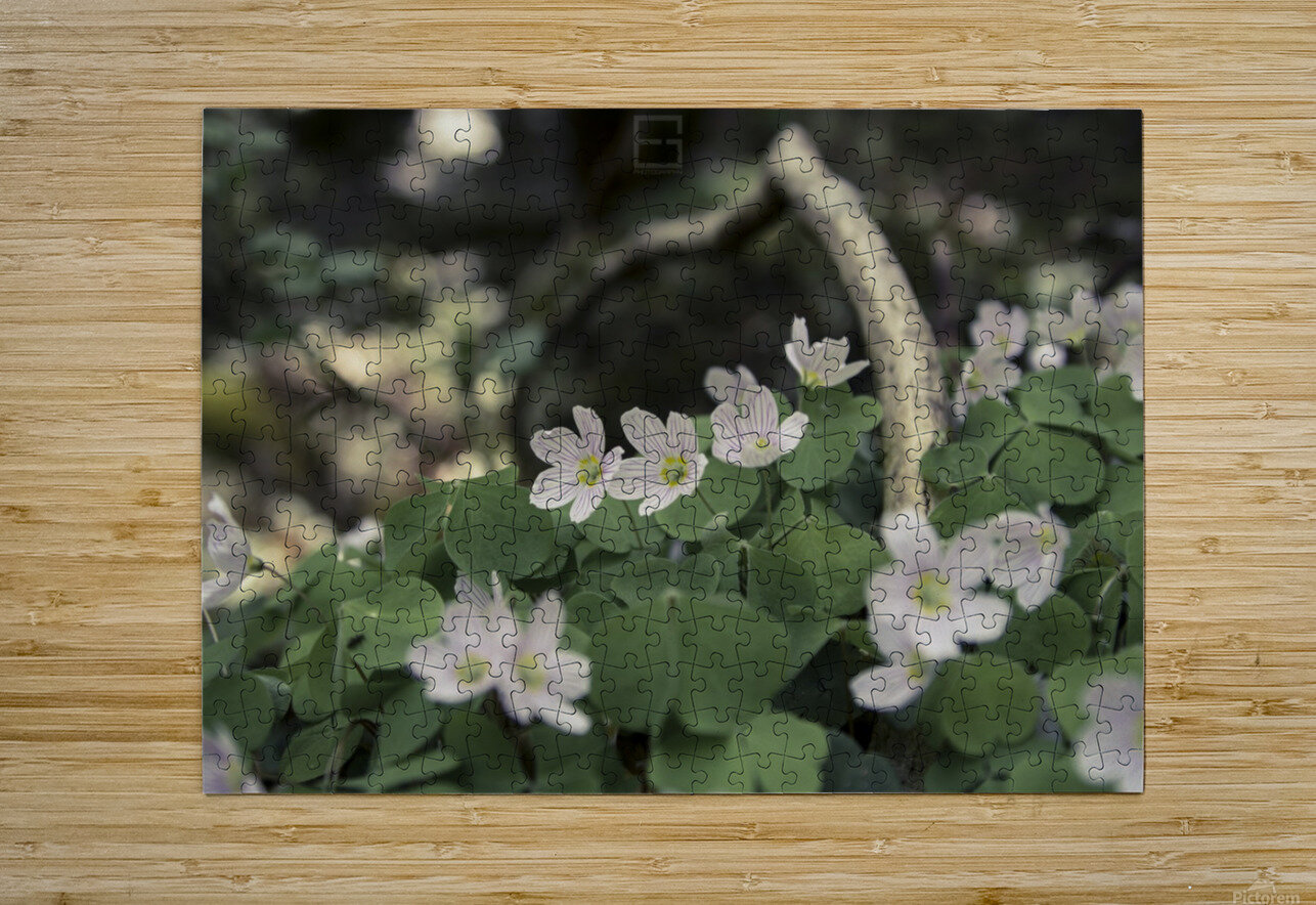 bokeh  HD Metal print with Floating Frame on Back