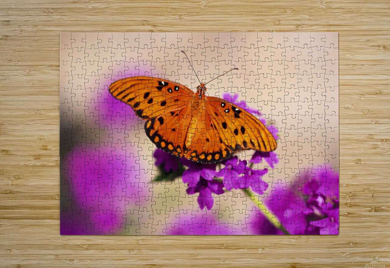 Orange Butterfly  HD Metal print with Floating Frame on Back