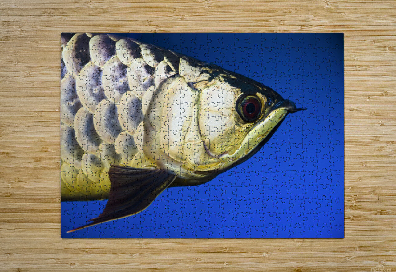 Closeup Of A Fish  HD Metal print with Floating Frame on Back