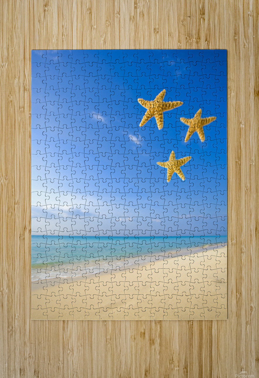 Starfish Falling In Front Of The Ocean  HD Metal print with Floating Frame on Back
