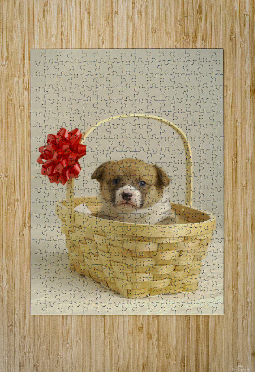Puppy In A Basket  HD Metal print with Floating Frame on Back