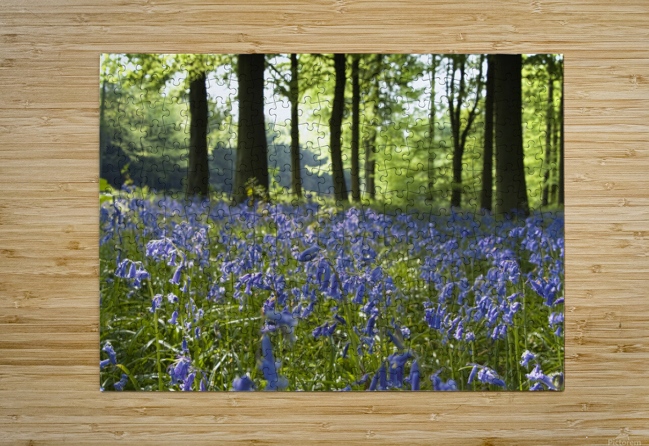 Bluebells On Forest Floor  HD Metal print with Floating Frame on Back