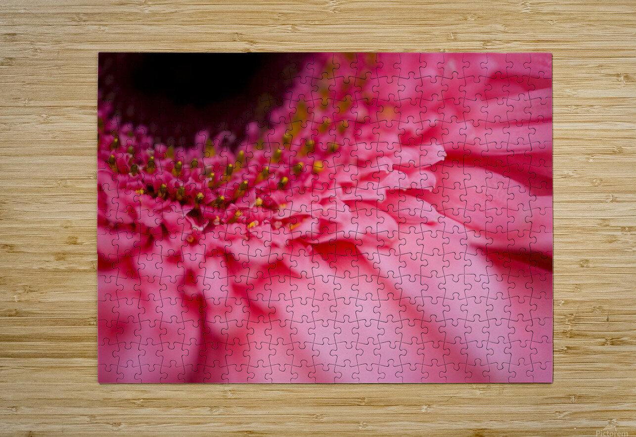 Close Up Of A Pink Flower  HD Metal print with Floating Frame on Back