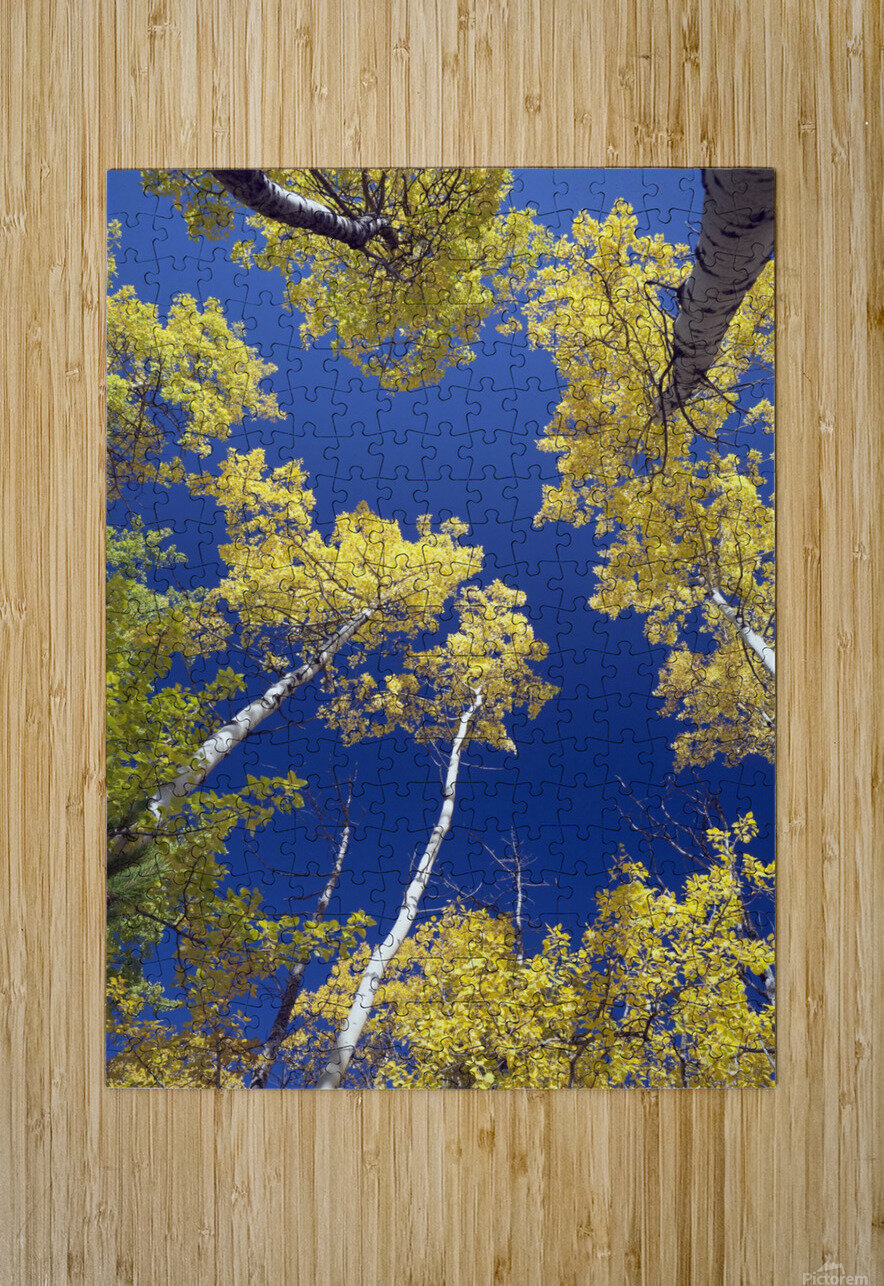 Forest During Autumn, Kananaskis, Alberta, Canada  HD Metal print with Floating Frame on Back