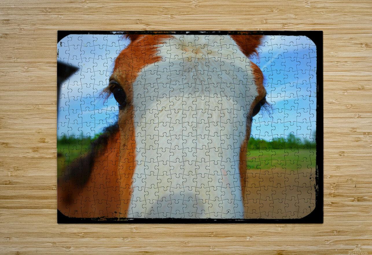 Baby Clydesdale  Impression métal HD avec cadre flottant sur le dos
