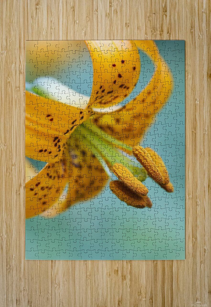 Oregon, United States Of America; A Lily On Mount Hood  HD Metal print with Floating Frame on Back