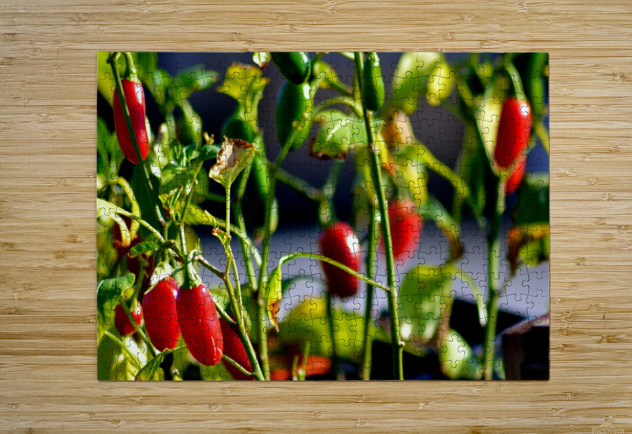 Peppers  HD Metal print with Floating Frame on Back