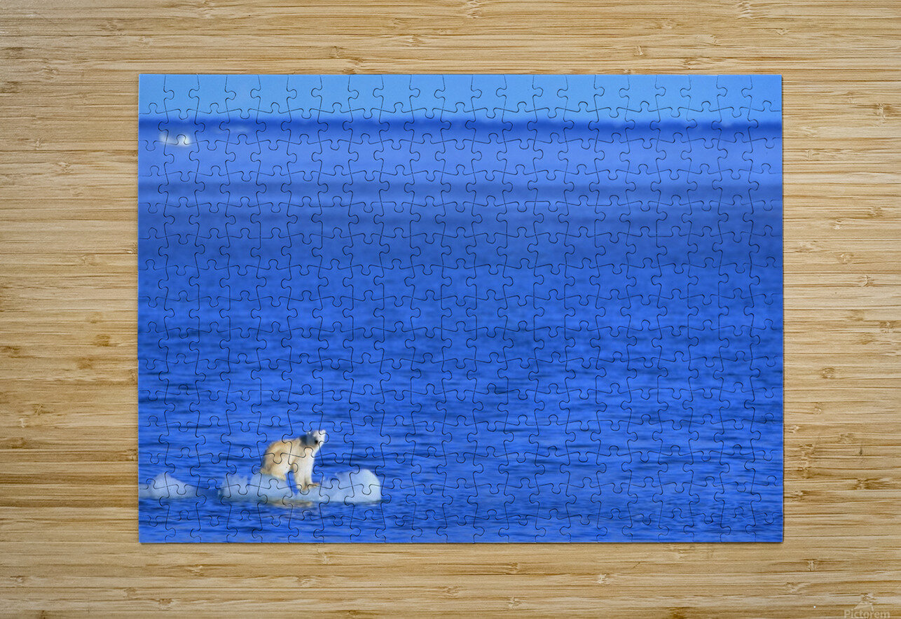 Polar Bear (Ursus Maritimus) Standing On A Piece Of Floating Ice; Coburg Island, Nunavut, Canada  HD Metal print with Floating Frame on Back