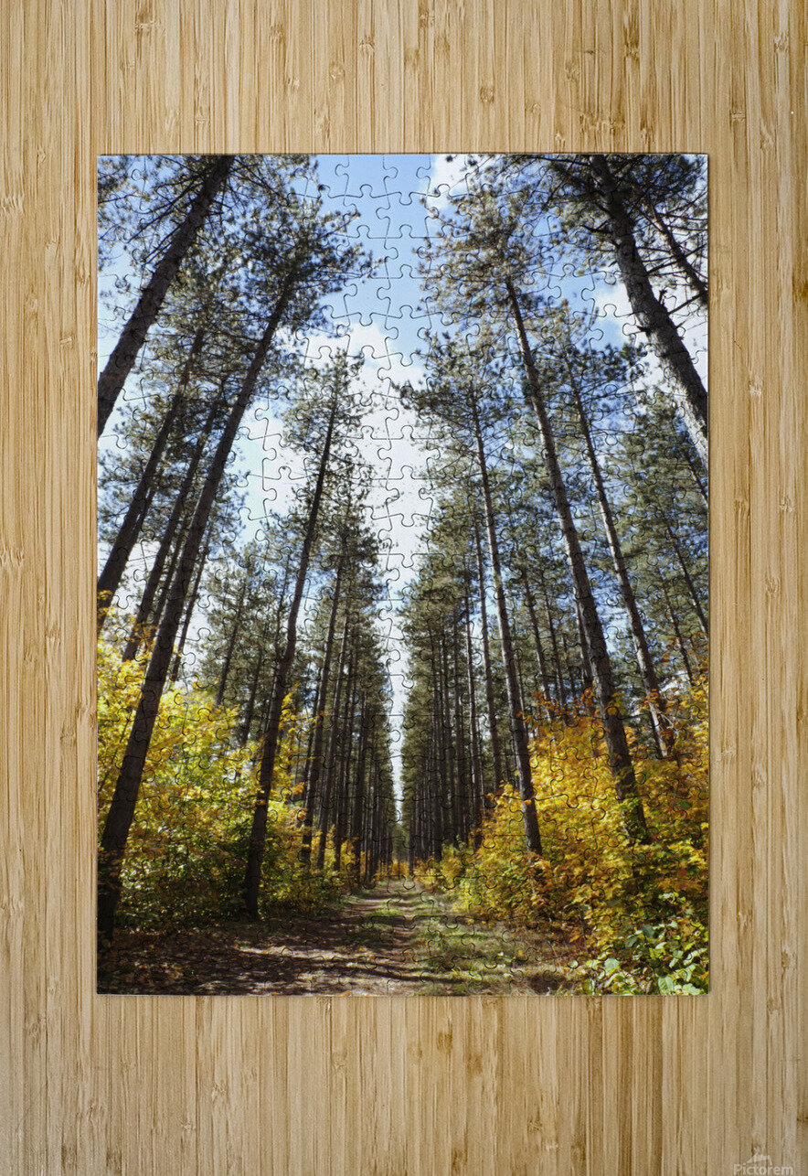 Path Through A Forest In Autumn; Sault St. Marie, Ontario, Canada  HD Metal print with Floating Frame on Back