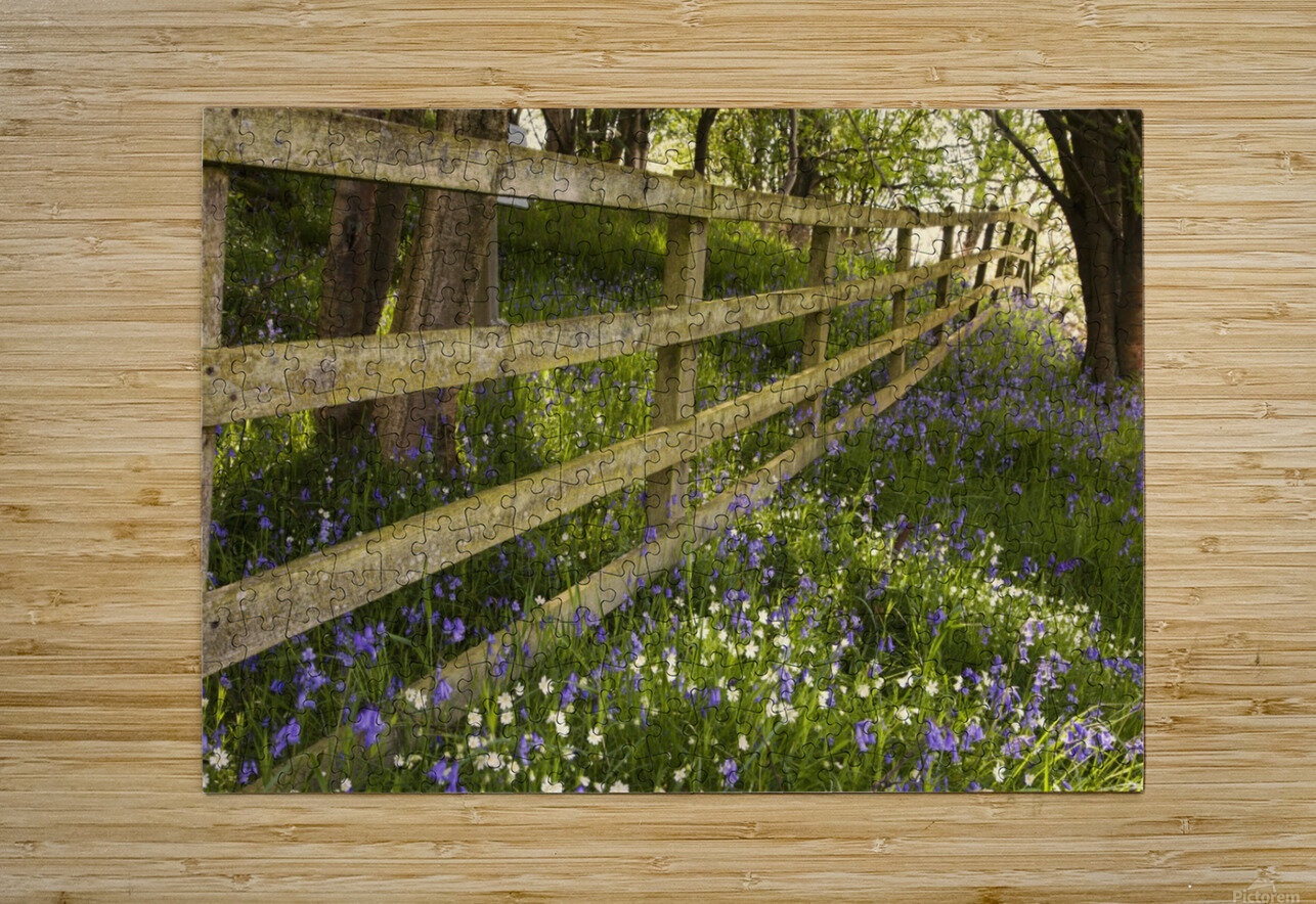 A Wooden Fence In A Forested Area With Blue And White Wildflowers On The Ground; Northumberland, England  HD Metal print with Floating Frame on Back