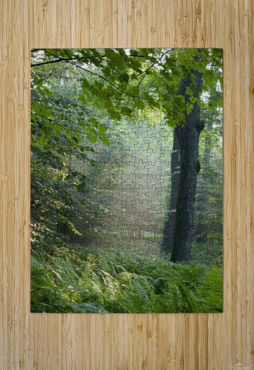 Trees In The Woods In The Early Morning Fog; Iron Hill, Quebec, Canada  HD Metal print with Floating Frame on Back