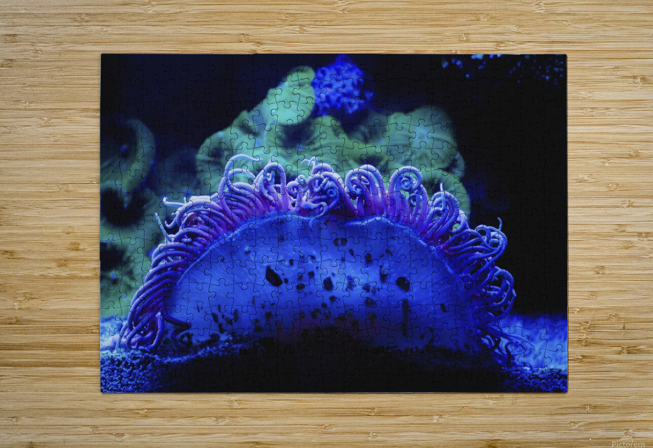 Blue coral underwater;Israel  HD Metal print with Floating Frame on Back