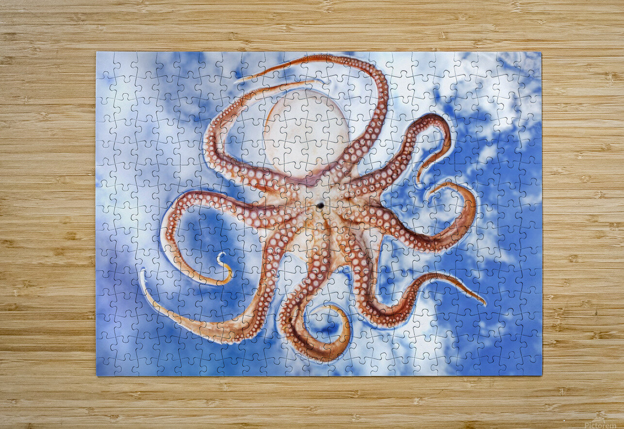 An octopus with blue sky and cloud in the background  HD Metal print with Floating Frame on Back