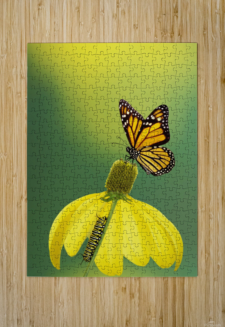 Caterpillar to butterfly;British columbia canada  HD Metal print with Floating Frame on Back
