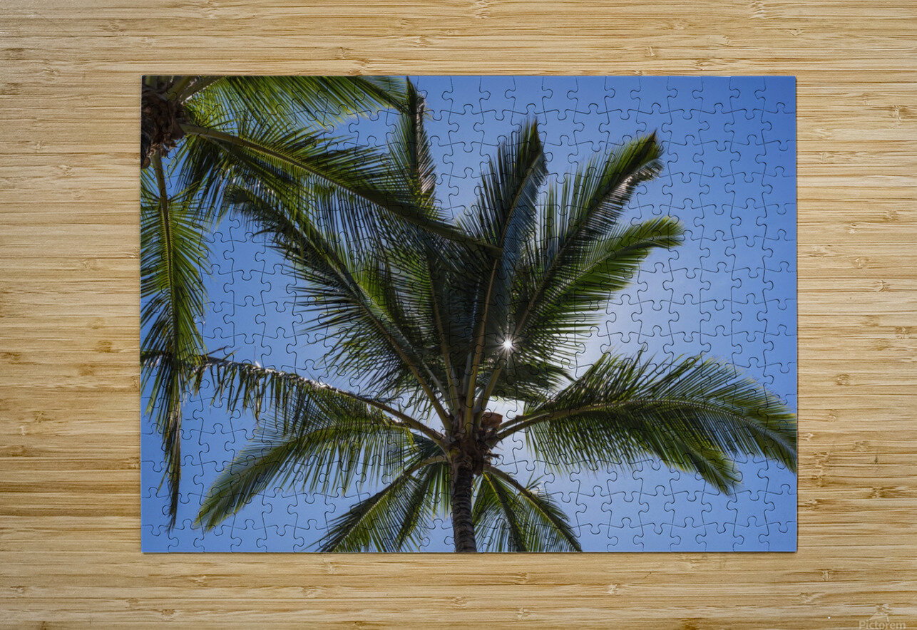 Coconut Palms backlit by the sunlight in a blue sky; Poipu, Kauai, Hawaii, United States of America  HD Metal print with Floating Frame on Back