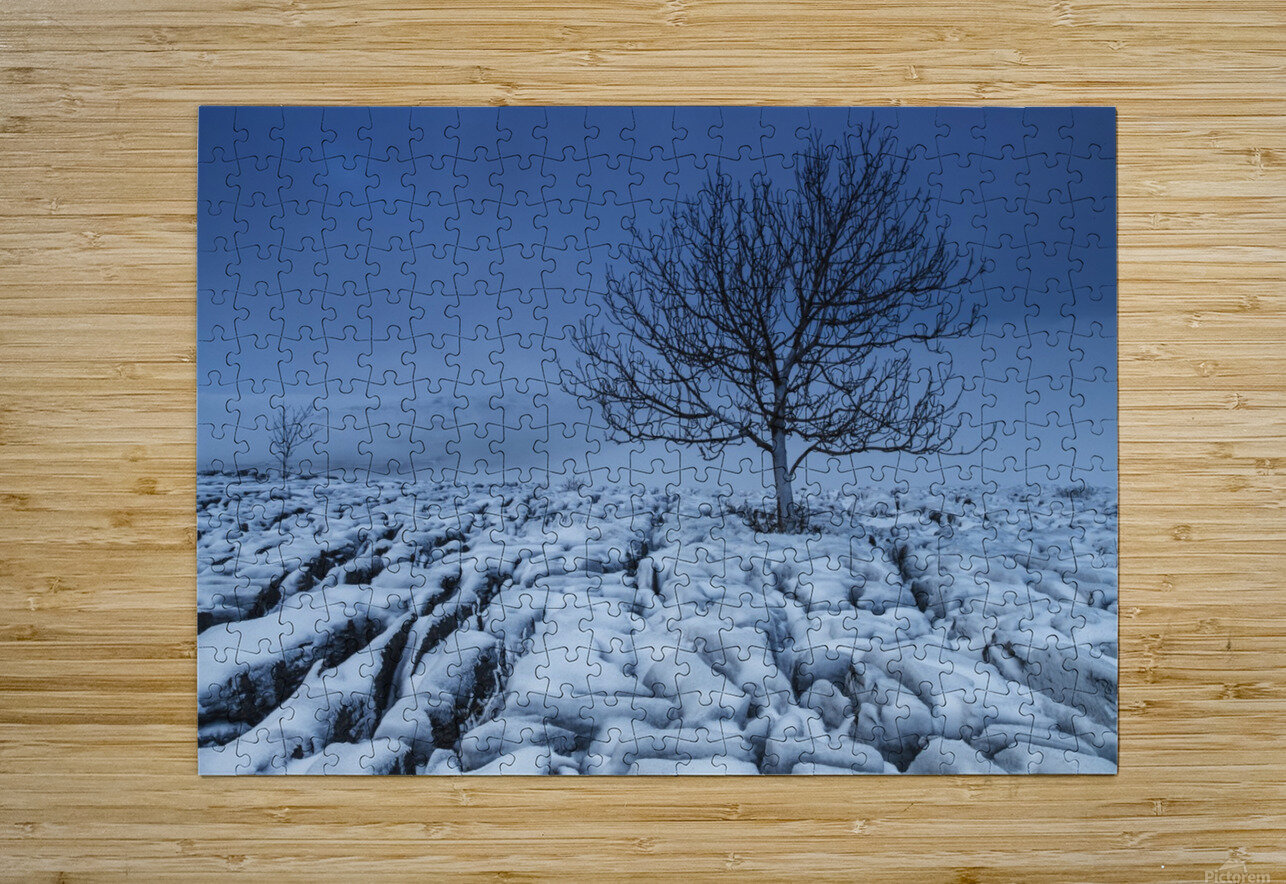 Cold Blue Trees, Yorkshire Dales, UK  HD Metal print with Floating Frame on Back