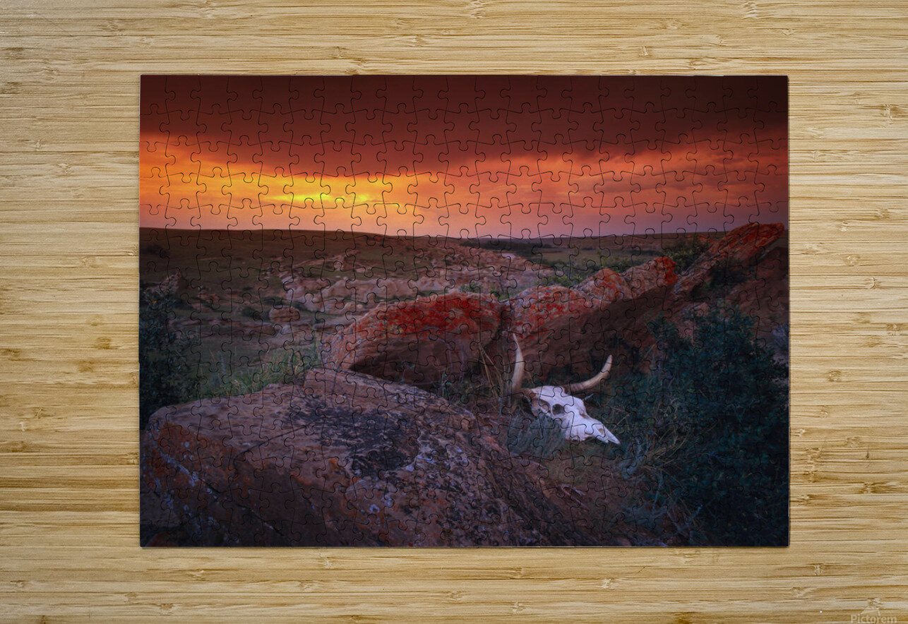 Cow Skull With Large Rocks In Field With Sunset, Writing On Stone Provincial Park, Alberta, Canada  HD Metal print with Floating Frame on Back
