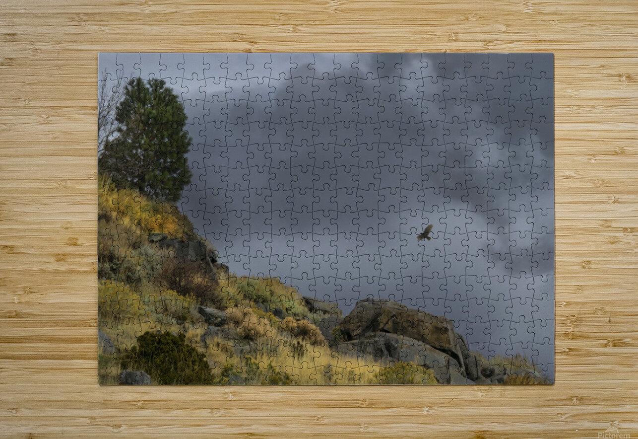 Desert Flyer  HD Metal print with Floating Frame on Back